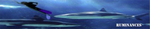 requin03.jpg