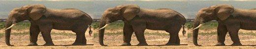 elephant051.jpg