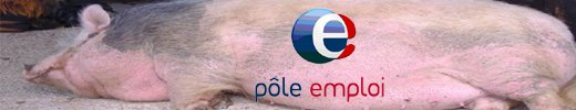 porc02.jpg