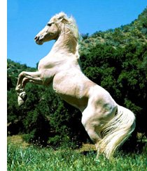 cheval100.jpg