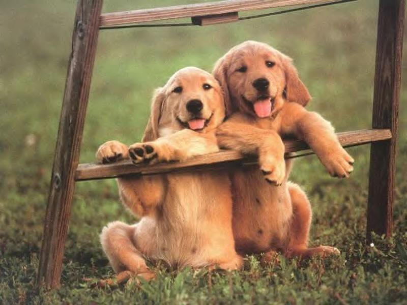 Photos insolites de chiens Chiens